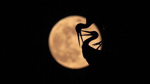 La luna llena austriaca y la Semana Santa latina: el día en fotos