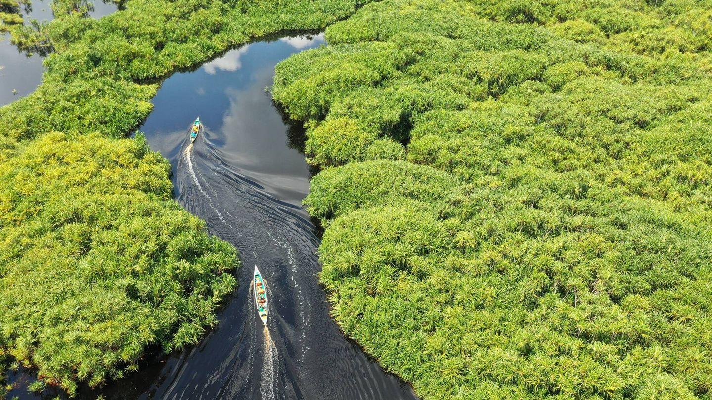 La conservación de ecosistemas es esencial para salvar a las especies endémicas en peligro. Foto: Unsplash