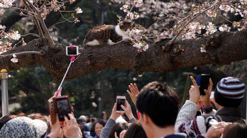 El objetivo de los selfies de los japoneses: los cerezos en flor