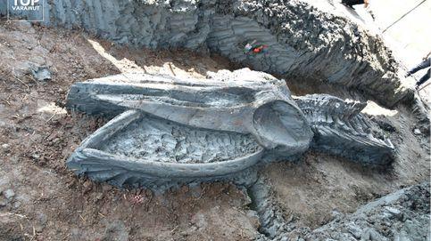 Descubren un fósil casi intacto de un cetáceo de 3.000 años y 12 metros cerca de Bangkok