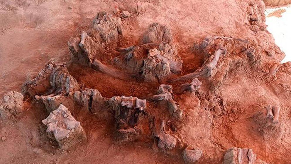 Hallan en México uno de los mayores cementerios de mamut de todos los tiempos