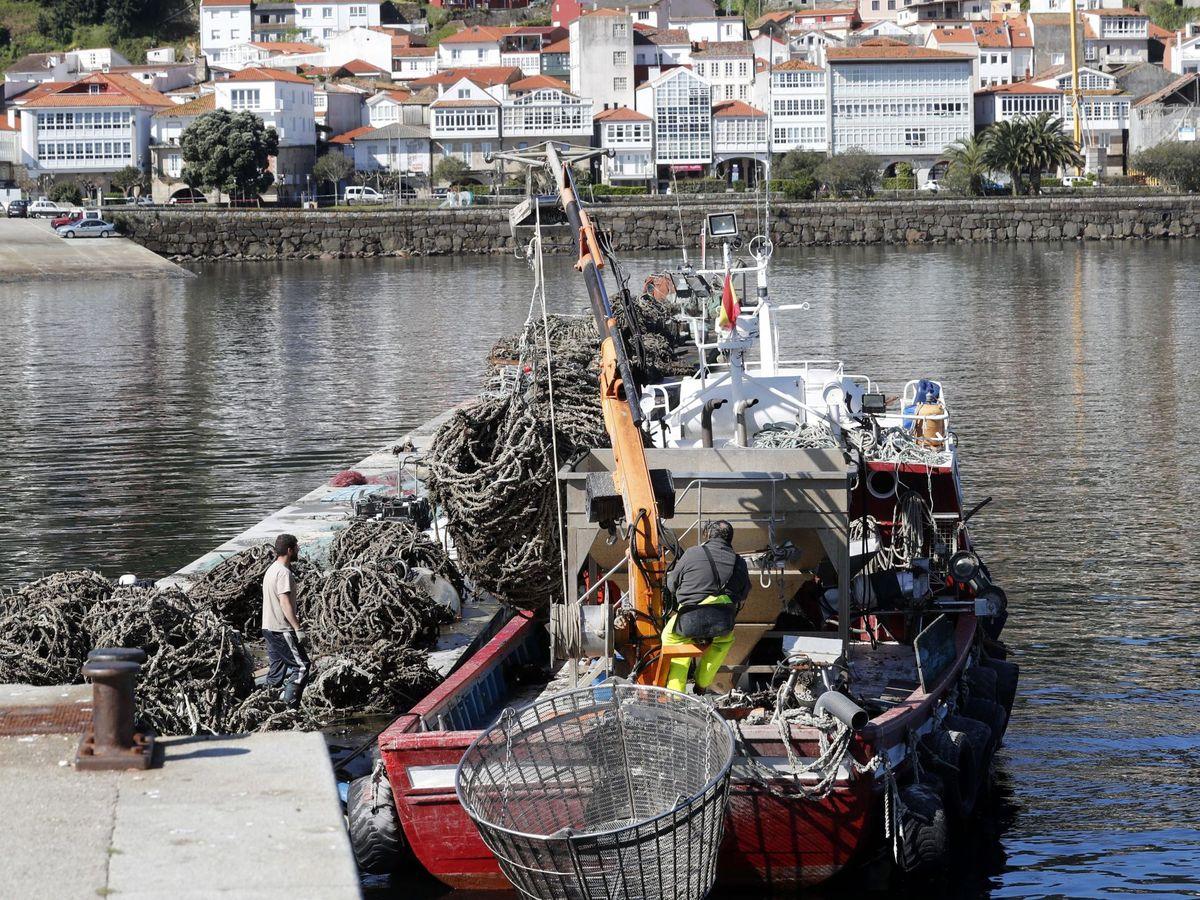 Foto: Un barco pesquero faena en el municipio coruñés de Muros. (EFE)
