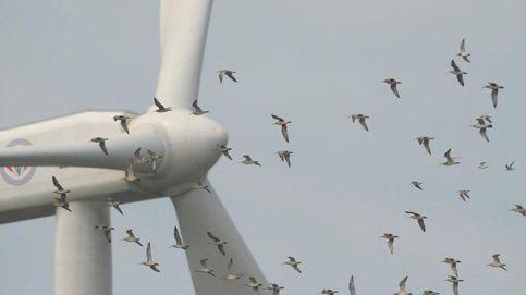 La AIE prevé una recuperación del 10% de las inversiones en energía en 2021