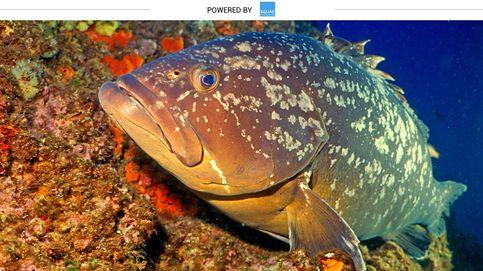 ¿Le pondrías nombre de persona a una pez? A este lo llaman Paco o Baldomero