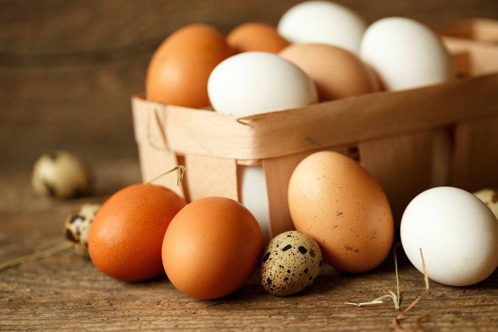 Foto: España es un país exportador neto de huevos.