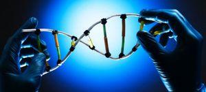 Foto: Las misteriosas raíces de la inteligencia: ¿hay un código genético para los genios?