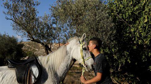 Un conflicto tan eterno como el amor por sus caballos