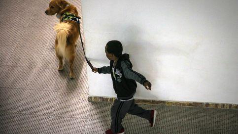 Los niños que viven con perros tienen mejor bienestar social y emocional