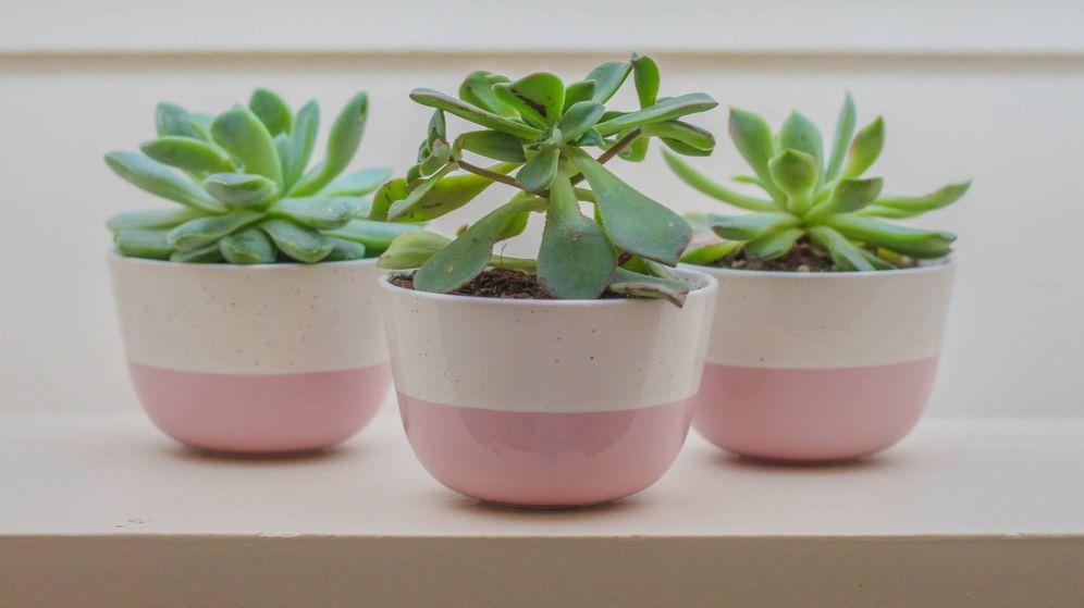 Foto: Consejos para tener un jardín en casa. (Beatriz Moraes para Unsplash)