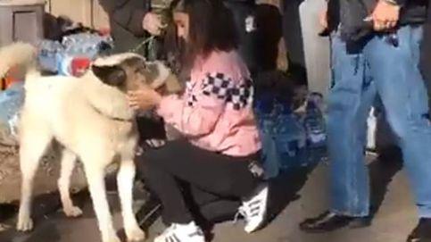 Encuentran a su perro perdido en los incendios de California 101 días después