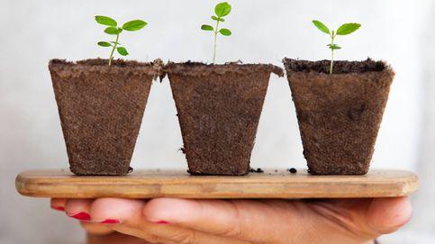 Las plantas se comunican entre ellas (y no es necesario que compartan suelo)