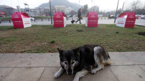 Protección de Datos avala sancionar al dueño de un perro por las fotos de un vecino