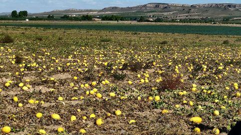 Cuatro millones de melones abandonados o cómo se despilfarra el agua en España