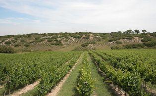 Foto: El Regajal: en Madrid también se hace buen vino