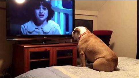 La Bulldog que ladra al malo de la película. ¡Con ella sí que estarás  a salvo!