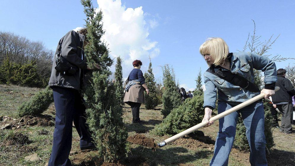Foto: Con esta medida se esperan plantar más de 175 millones de árboles cada año (EFE/Georgi Licovski)