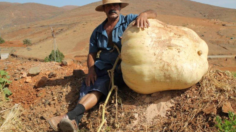 Un agricultor canario cultiva una descomunal calabaza de 117 kilos