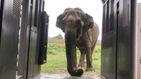 Después de un viaje de 36 horas, la elefanta Ramba llega su nuevo hogar