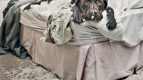 Dormir con tu perro es la clave para un buen descanso, según la ciencia