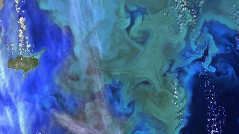 Cuestionario del Día de la Tierra: ¿eres calamar, tejón, mamut o coral?