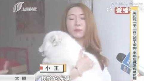 Paga cientos de dólares por un perrito...que resultó ser un zorro blanco