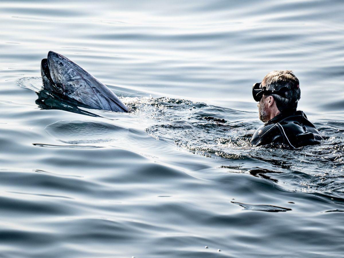 Foto: Federico de Dinamarca, con un atún en Skagen. (EFE)