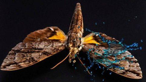 ¿Cómo aguanta una mariposa las gotas de lluvia en una fuerte tormenta?