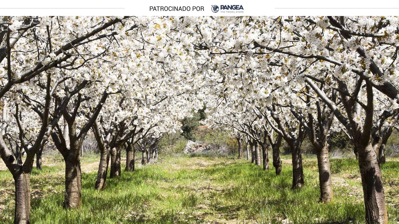 Qué Hacer En Valle Del Jerte Excursiones Para Conocer Los Cerezos