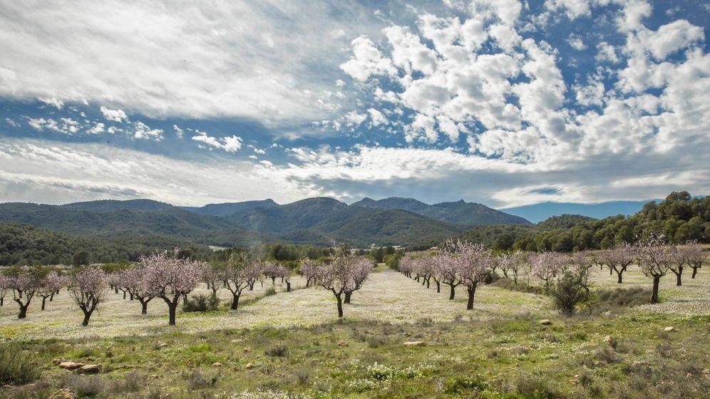 Foto: Almendros en flor en Murcia. (EFE)