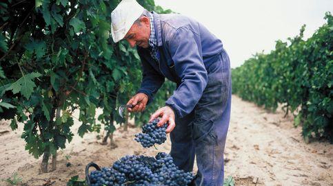 Bodegas Riojanas: la familia que pasó de cultivar un viñedo a montar un imperio