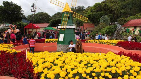 Millones de flores en Panamá