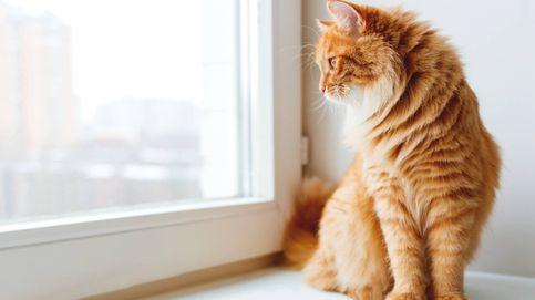 La relación entre dos gatos que va a restaurar toda tu fe en el amor