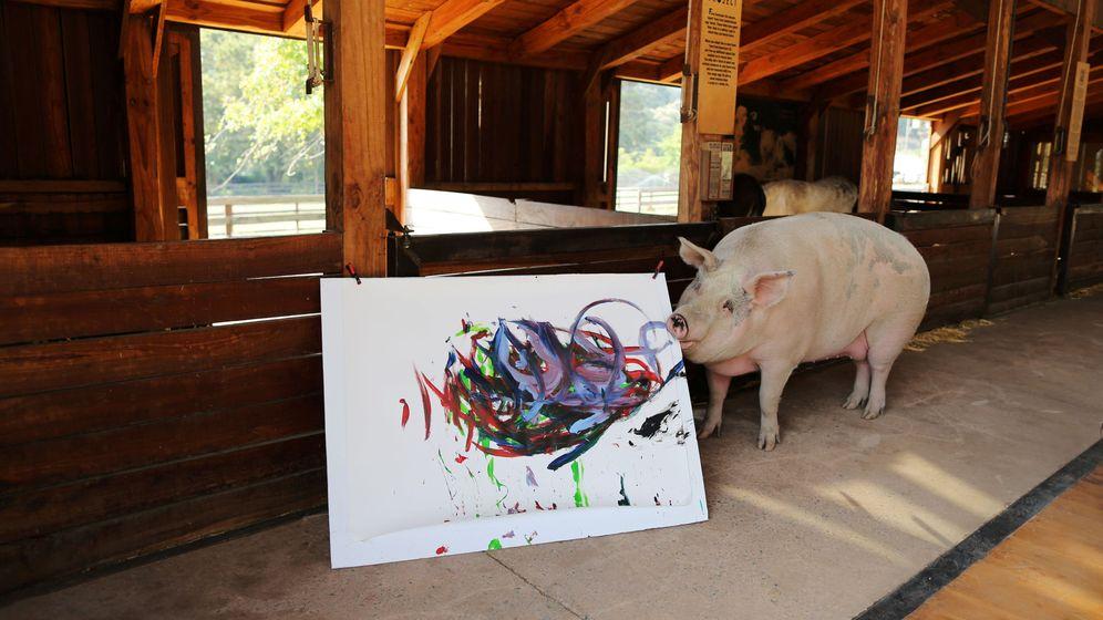 Foto: Pigcasso, junto a una de sus creaciones en el santuario donde vive (Reuters/Sumaya Hisham)