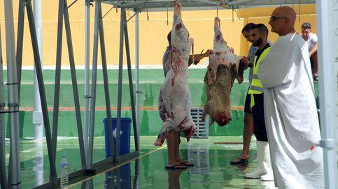 'Guerra' del cordero en Melilla: bronca política por los ejemplares sacrificados