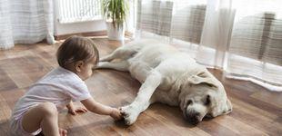 Post de El perro más fiel: qué hace cuando su dueño va al colegio