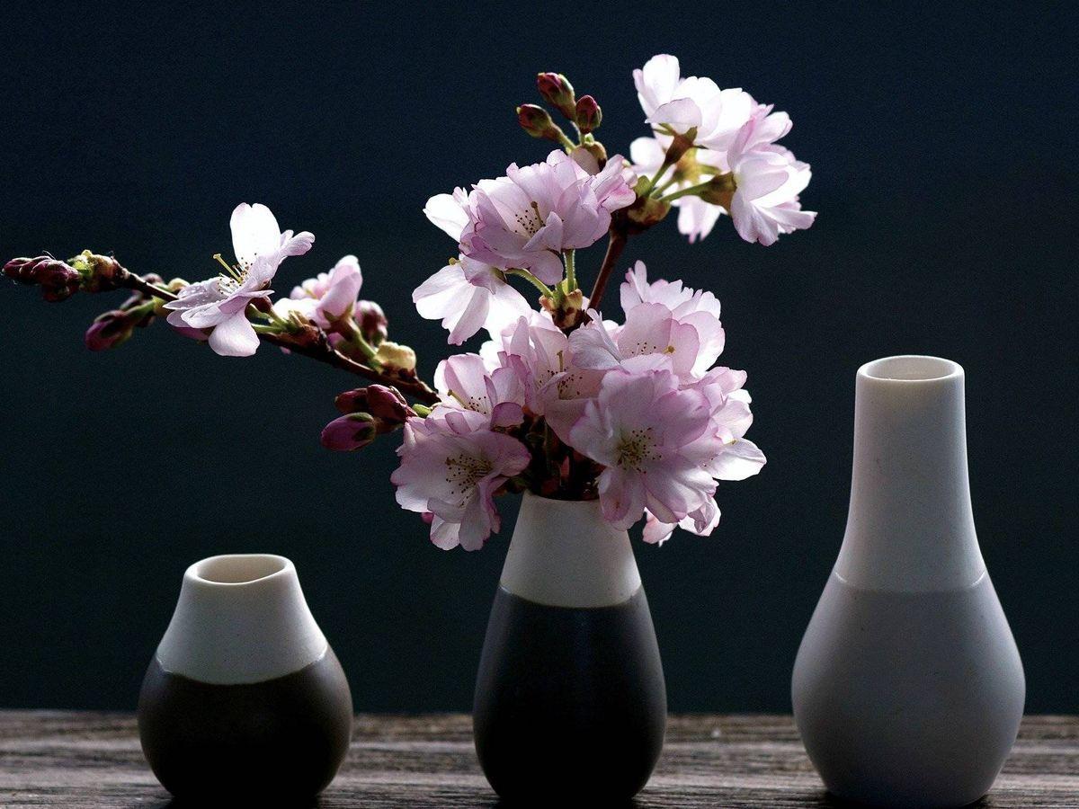 Floreros Para Decorar Tu Casa Y Jardín Con Preciosas Plantas Y Flores