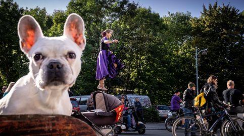 Vendimia en el sur de Francia y 50 aniversario de la ciudad libre de Christiania: el día en fotos