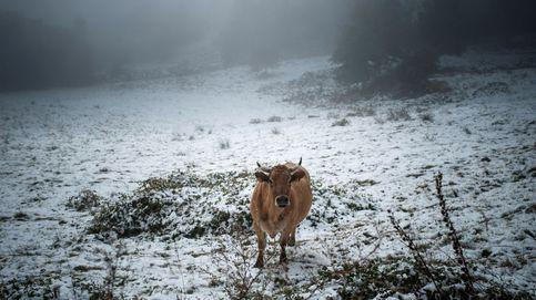 La nieve llega a Orense