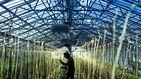Los parados podrán trabajar en la agricultura y cobrar el subsidio