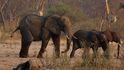 Mueren 200 elefantes en Zimbawe por culpa de una sequía extrema
