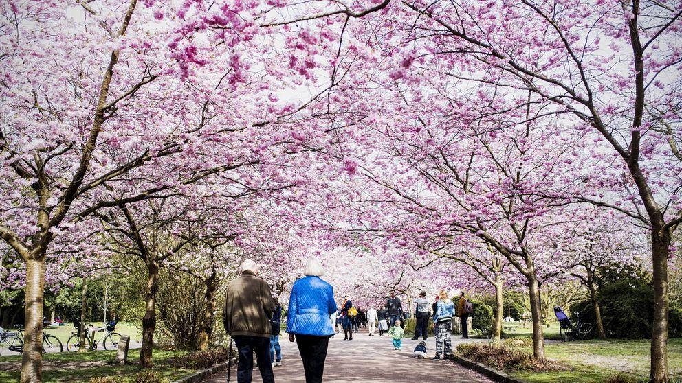 De Dinamarca a Nueva Zelanda: los países más felices para vivir