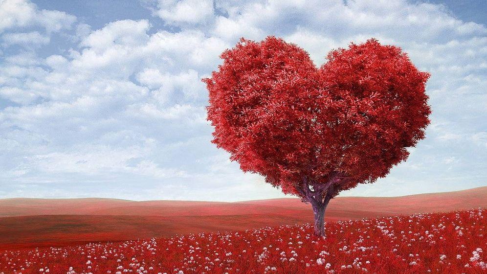 Foto: Un árbol con forma de corazón. (Pixabay)