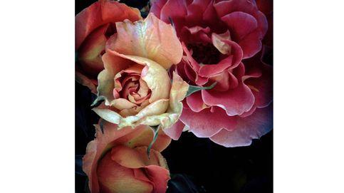 Las flores como símbolo del amor, la belleza y la decadencia