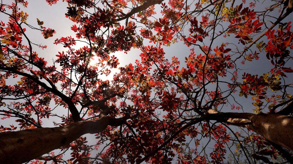 Foto: Contaminación en el País Vasco: un árbol californiano es el que más la reduce (EFE)