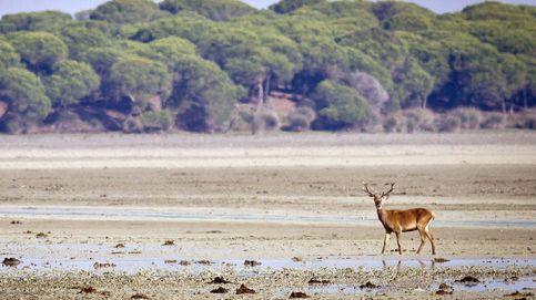 El riesgo sísmico y de contaminación de Doñana,  banderas contra Gas Natural