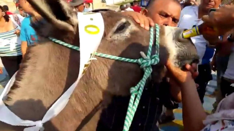 Una mujer da cerveza a su burro por la nariz como premio por ganar una carrera