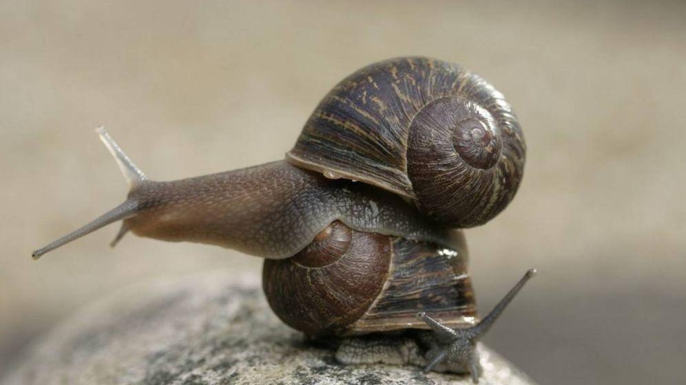Foto: Jeremy (encima), el desdichado caracol zurdo