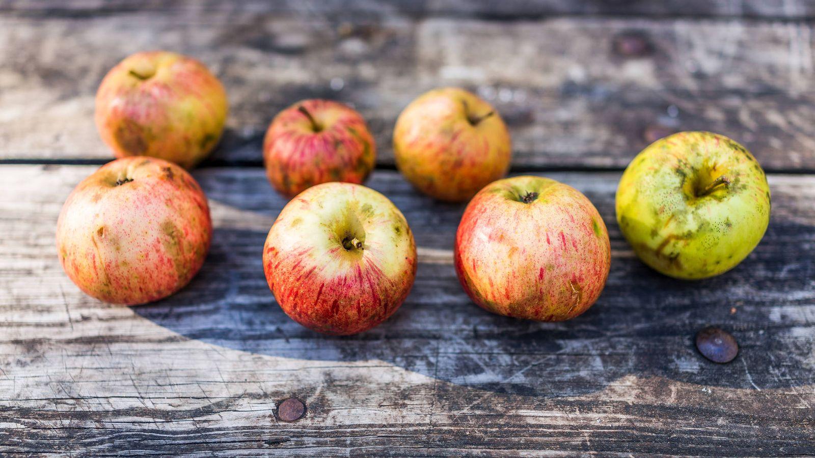 Foto: Bellas e imperfectas manzanas. (iStock)