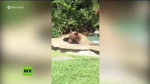 Un oso se da un baño en el jacuzzi de un vecino de California