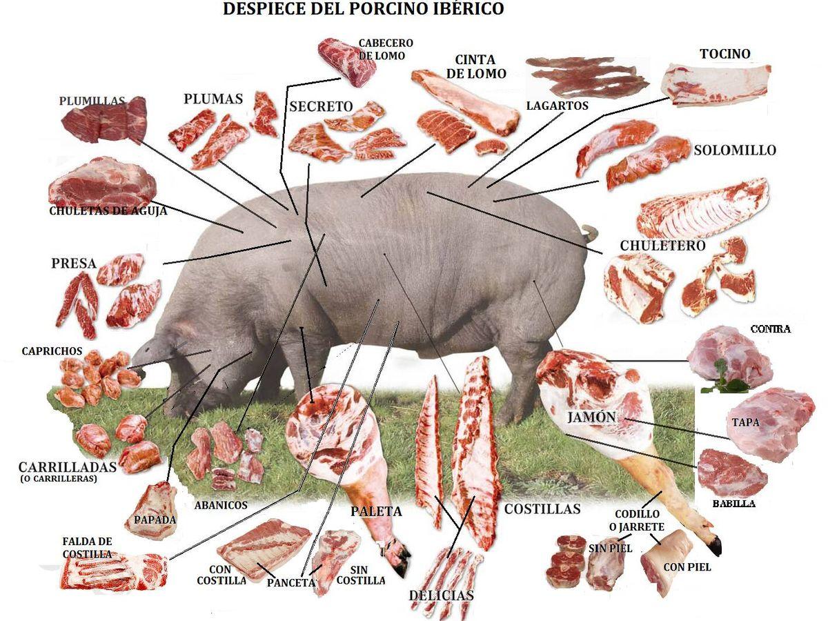 Foto: El despeine del cerdo ibérico.